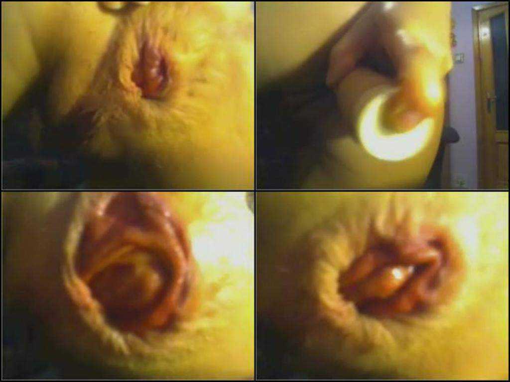 Sexy webcam wife giant prolapse anus stretching closeup