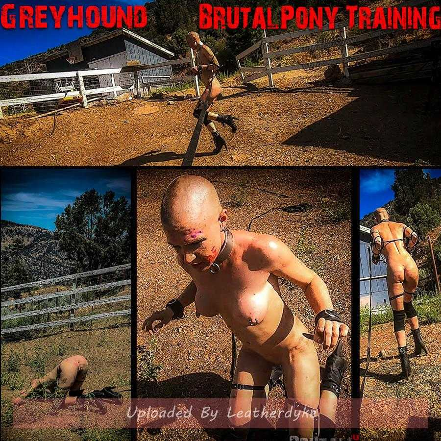 Greyhound's Brutal Pony Training (Release date: May21, 2020)